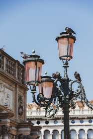 Pigeons on ornate pink lamp post in Venice against blue sky