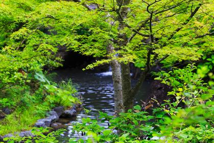 新緑と滝から流れる小川