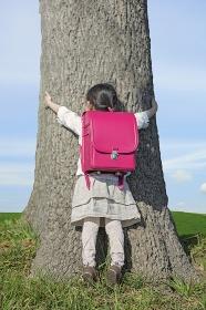 木の幹を両手で抱えるランドセルを背負った女の子の後ろ姿