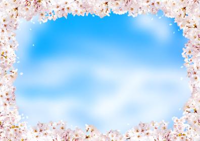桜の花びらの春の背景画像