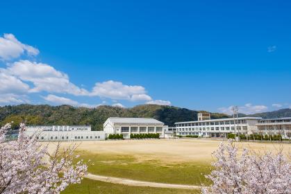 桜と学校 春 入学イメージ