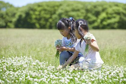 お花を摘む日本人の女の子
