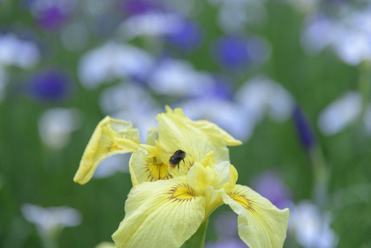 梅雨に咲くカラフルで綺麗な花