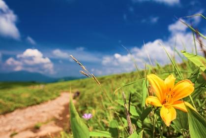 長野県・諏訪市 ニッコウキスゲと夏の車山高原の風景