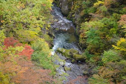 紅葉の鳴子峡と渓谷のせせらぎの風景