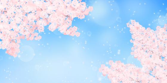 満開の桜と青空のイラスト_春のイメージの背景