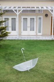 芝生に置かれた傘