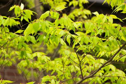 長野と山梨に跨がる八ヶ岳の植物・日本
