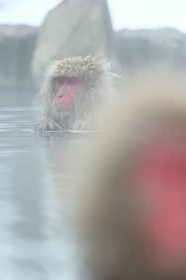 露天風呂のお猿さん
