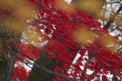 紅葉した葉と樹木