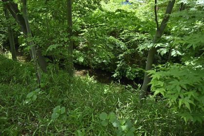 草木に覆われた玉川上水沿いの風景・2021年4月(小平市・東京都・日本)