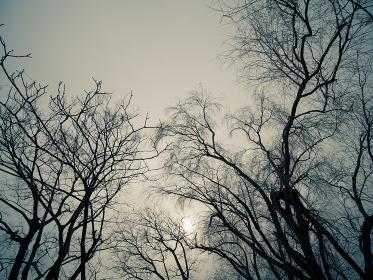 冬枯れの木のシルエット