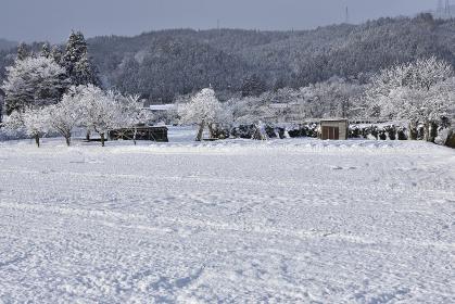 冬の晴れ間の農地