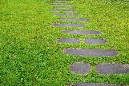 夏の芝生と飛び石