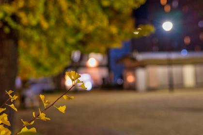 夜の街角の美しい銀杏