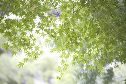 ナチュラルガーデン新緑の紅葉