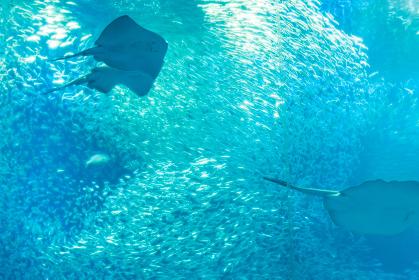 魚の群れ 水槽