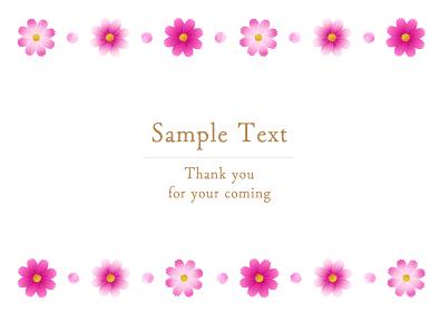 ピンクのグラデーションのコスモスのフレーム、ライン状の装飾、秋イメージ