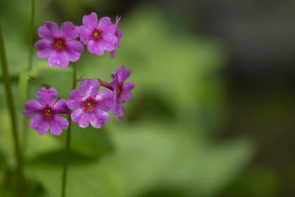 野原の小さな赤い花