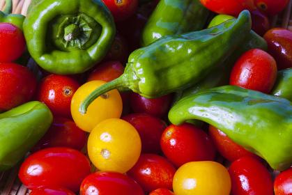 家庭菜園で収穫したピーマンとプチトマト