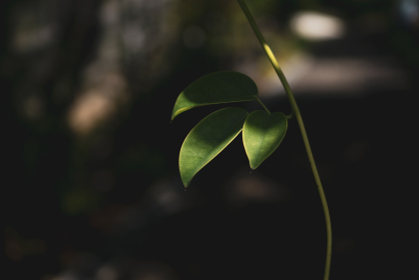 淡い光と新緑の葉 5月