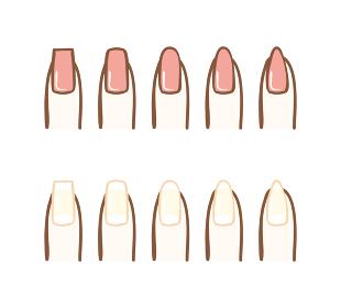 爪の形の種類