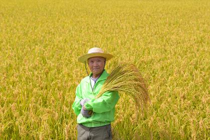 稲を収穫する笑顔のシニア