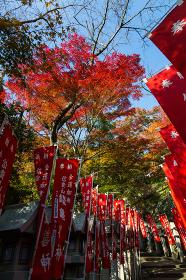 朝護孫子寺 (奈良県生駒郡 2012/11/19撮影)