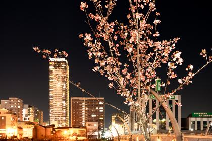 夜桜と北九州市の都市夜景