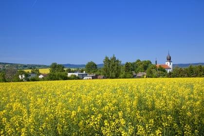 チェコ ボヘミア プルゼニ郊外