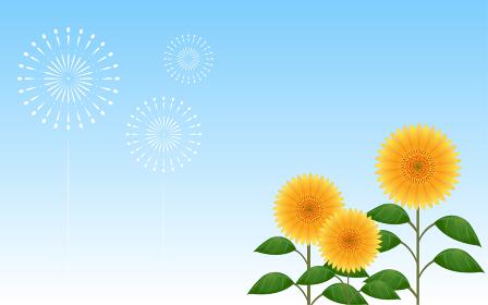 青空を背景にした向日葵と打ち上げ花火