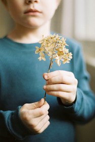 Little boy holding a dried hydrangea flower with his hands