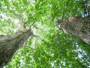 大樹の幹と枝