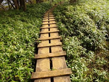 丹沢山塊・笹原の木道