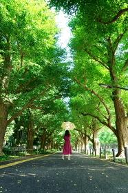 銀杏並木の木洩れ日の中で黄色い日傘をさした赤いワンピースの女性 中央