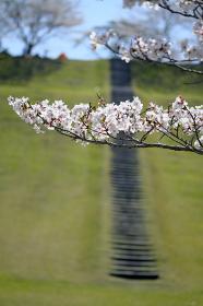 知覧平和公園の春の階段