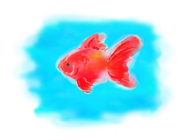 金魚、手書き、挿絵、観賞魚、キンギョ、きんぎょ、カット
