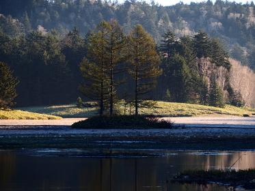 尾瀬沼の朝の3本杉
