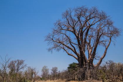 アフリカの景色