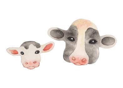 牛の親子 水彩画カラーイラスト(顔のアップ)