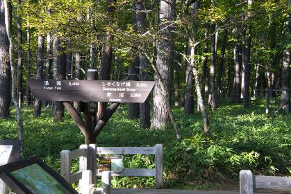 小田代ヶ原へのハイキングコース