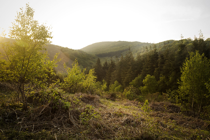 A valley view of woodland on Dartmoor