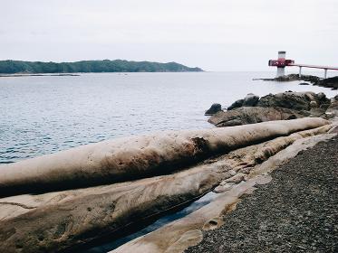 高知県・竜串海岸の足摺海底館