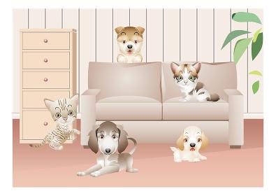 室内のソファーやカーペットの上の犬や猫