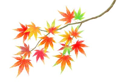秋、一枝の色とりどりのもみじ