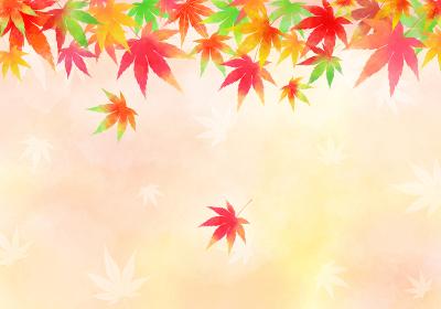 秋の背景、色とりどりのもみじ 横