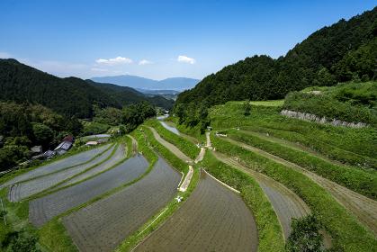 梅雨晴れの明日香村細川棚田