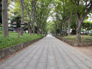 日本の神社の風景 氷川神社の参道 埼玉県さいたま市
