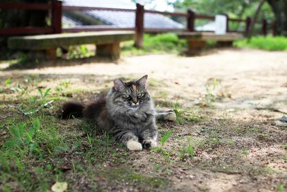 公園で涼む長毛種の猫