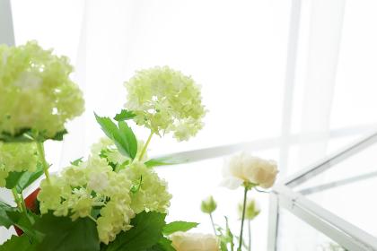 室内観葉植物イメージ